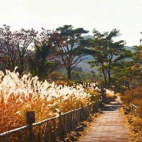 [참좋은여행] 후쿠오카/유후인/벳부 3일_379,000원부터